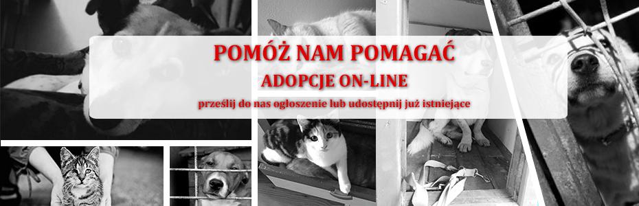 Ogłoszenia o adopcji - już wkrótce